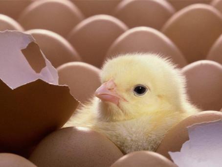 Antibiyotik Verilen Hayvanlardan Üretilen Et ve Tavuk Pazarı Daralıyor
