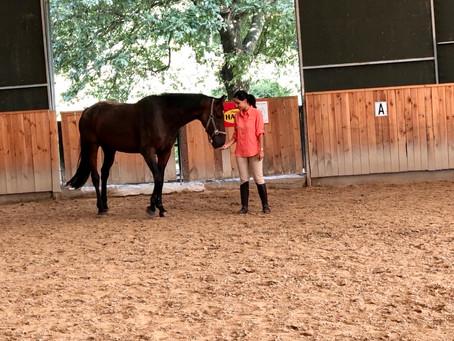 """""""Operant (Edimsel) Koşullandırma"""" nedir? Atlarda Nasıl Uygulanır?"""