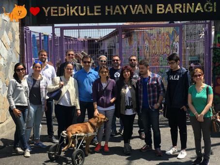Yale Mezunları ile Barınak Günü | Shelter Day At The #YaleDayofService