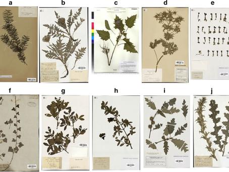 Herbarium: Nedir? Nasıl hazırlanır?