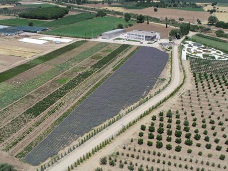 BAÇEM Türkiye'nin İlk Çay Ağacı ve Vetiver Bireylerini Yetiştirdi