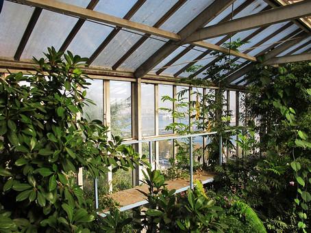 Alfred Heilbronn Botanik Bahçesi'nin Hikayesi
