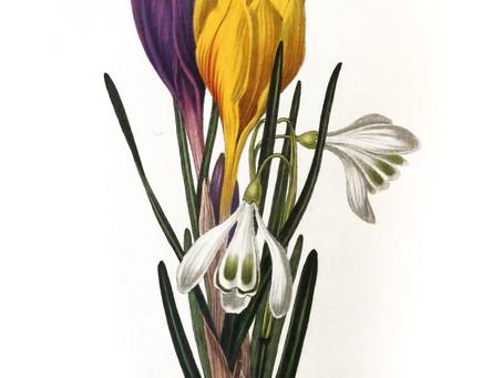 Çiçeklerin Ahlakı