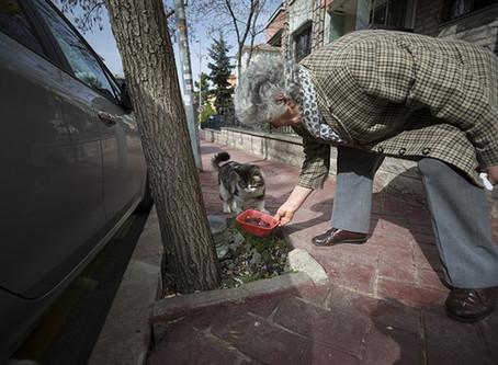 600 Milyon Sokak Hayvanı Azime Ninelerini Bekliyor