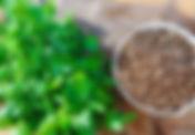 Kişniş Yaprak.jpg