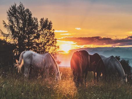 At Sağlığında Aromaterapi & Geleneksel Tedaviler Yayınımız Öncesinde Ufak Notlar...