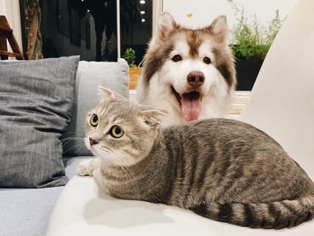 Kediler Sevgiyi Kıskanır, İşgalcileri Sevmezler