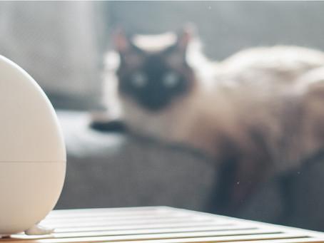 Evcil Hayvanlarda Aromaterapi: Temel Konular & Güvenlik