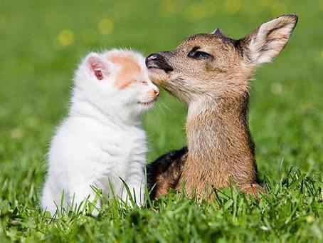 Hayvanların da İnsanlar Gibi Duygusal Varlıklar Oldukları Yasallaştı