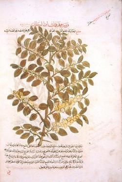 ibn baytar camiu mufredat al adviya 3