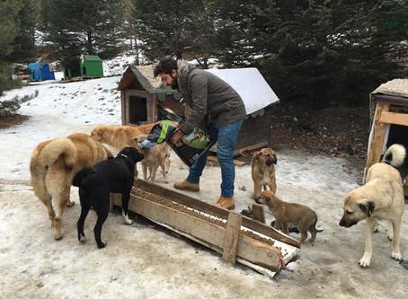 Köpekleri Doğal Ortamda Besleyip, Yuvalandırmak İçin Çalışan PatiPark Ankara Melekleri ile Tanışın!