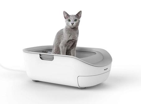 İnternet Üzerinden Kedinizi Bıyık Sağlığına Kadar Kontrol Edebilmek İster Misiniz?