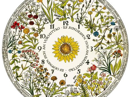 Çiçeklerin Açılma ve Kapanma Rutinleriyle Zamanı Tahmin Etmek: Hanımeli'ne 5 Kala?