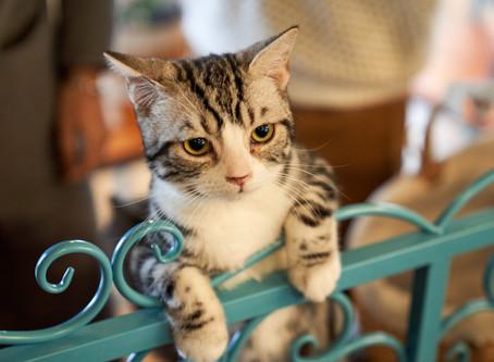 Kedilerin karakterleri ve renkleri arasında bir bağlantı var mı?