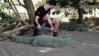 Crocodile research!