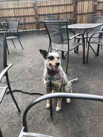 Dixie on Dog Friendly Patio