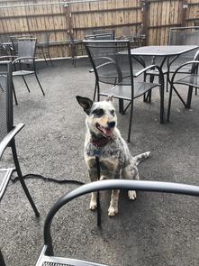 Dixie on Dog Friendly Patio
