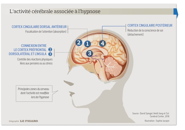 Les secrets de l'hypnose se dévoilent