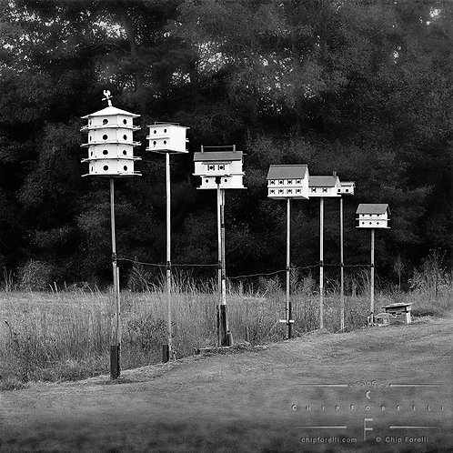 Row of various shaped birdhouses on poles in perspective with dark trees filling the background.