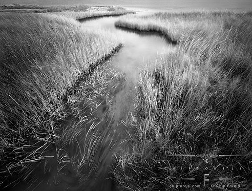 An estuary meandering amongst moving grasses in black and white.