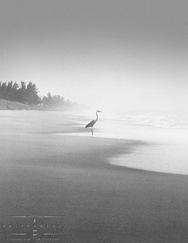 heron_on_shoreline.jpg