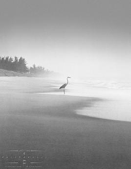 heron_on_shoreline.jpg