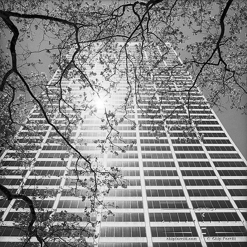 Looking up at a curved face skyscraper reflecting the sun with a tree silhouetted in the foreground.