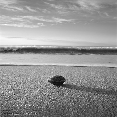 A clam sitting on a sandy beach with waves breaking in the background in black and white.