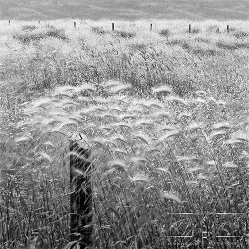 A wooden fencepost surrounded by fluffy reeds and grasses showing motion.