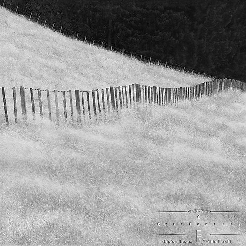 A wooden fence in a field with dark trees in the distance in black and white.
