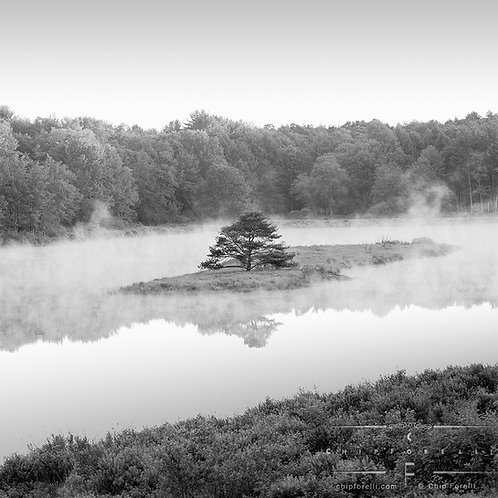Small pine tree on a small island in a misty pond with trees in the background and foreground grasses in black and white.