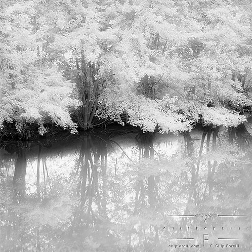 Trees with dark trunks and bright foliage flanking a river with reflections in black and white.