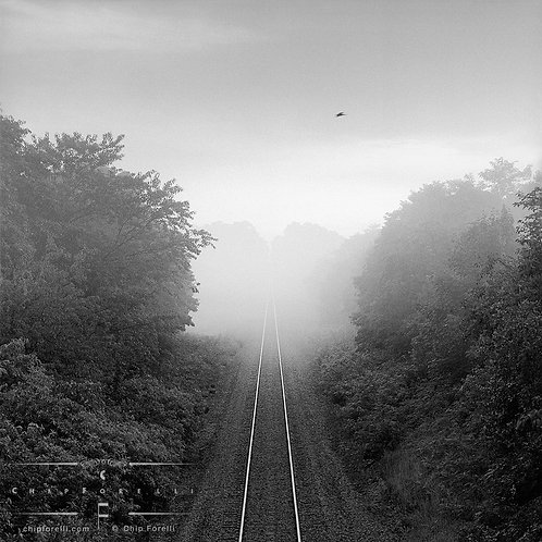 Perspective view of railroad tracks centered between trees receding into fog in the distance in black and white.