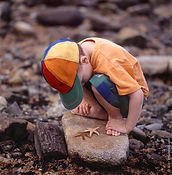You can license images like this young boy closely examining a starfish on a tide pool rock by Chip Forelli.