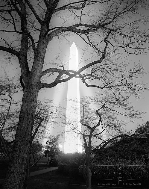 A night view of the Washington Monument illuminated by spotlights with dark trees and branches in the foreground.