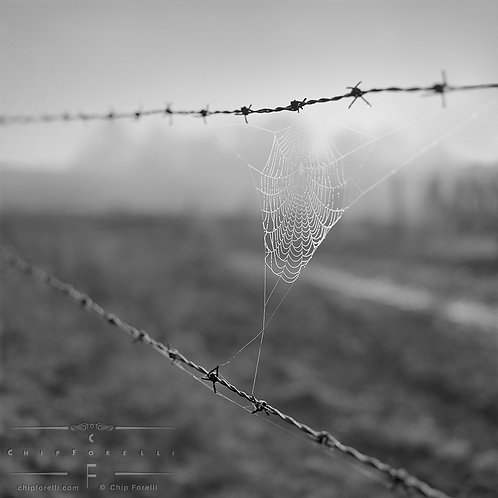 A rural scene of a dewdropped laced cobweb stretched between strands of a barbed wire in B&W.