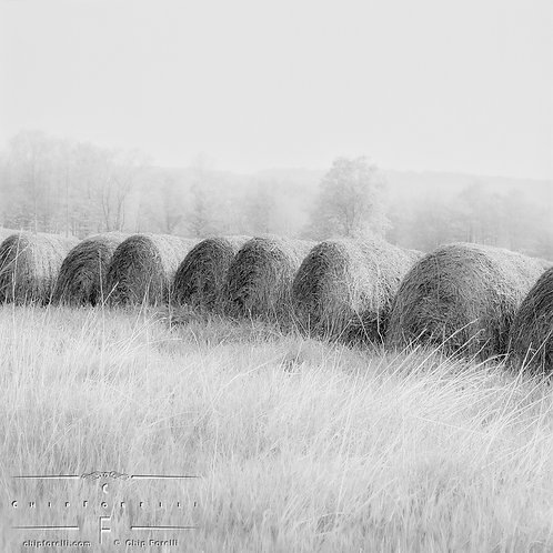 A row of circular hay bales in a bright sunlit field with fog in the background in black and white.