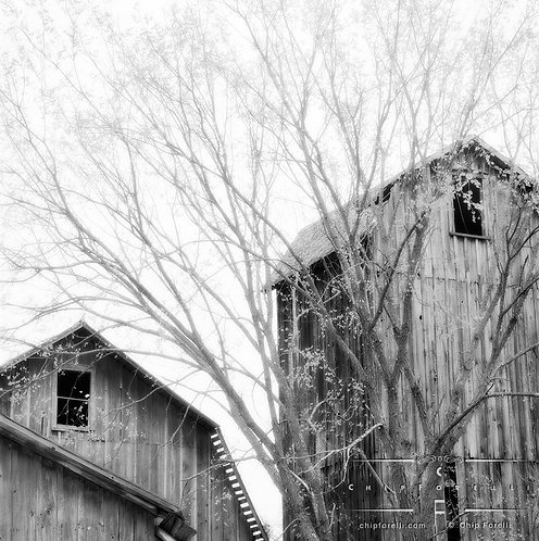 Two grey barns with black windows in black and white with light grey trees and branches filling the frame.