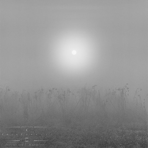 A foggy field with delicate grasses and a hazy sun centered in the sky.