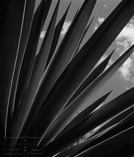 tropical_geometry.jpg
