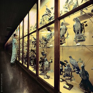 At the Museum copy.jpg