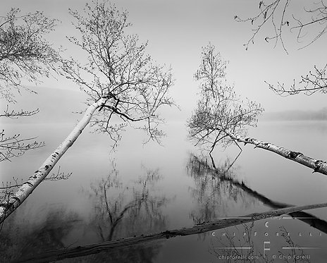 Two felled trees hovering over a misty, foggy lake in black and white.