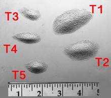 Bump T1 - T5 $10 each.JPG