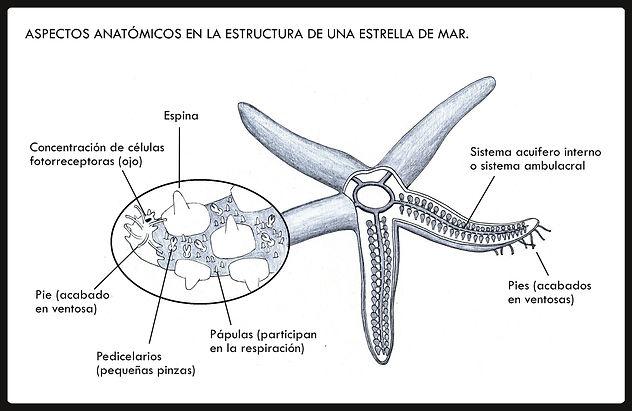 web_ilustrac_cientif-página003.jpeg