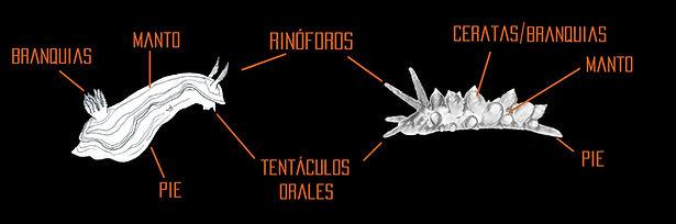 nudibranquios web2.jpg