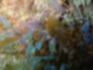 alga parda abanico Dictyota cyanoloma