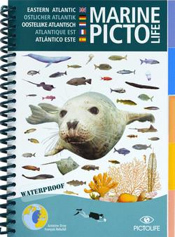 marine-pictolife-eastern-atlantic_DP43-3