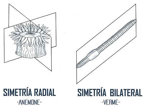 simetrias 2 GAL.jpg