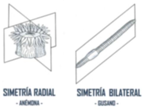 simetrias 2.jpg