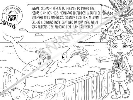 Um final de tarde mágico no costão do Morro das Pedras.